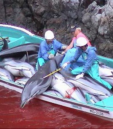 Stop The Taiji Dolphin Hunt   Conservation, Ecology, Environment and Green News   Scoop.it