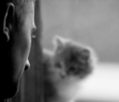 Prisoners Rehabilitate Death Row Cats | Dissertation and Research Agenda Things | Scoop.it