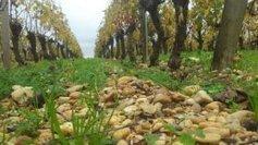 Les terroirs font la richesses des vignobles aquitains | Agriculture en Dordogne | Scoop.it