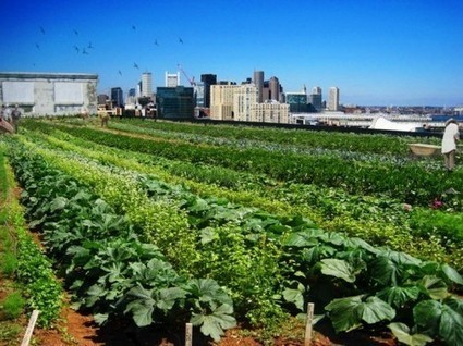 Boston's Urban-Farming Seeds; Hub's Weight Loss; More! | Vertical Farm - Food Factory | Scoop.it