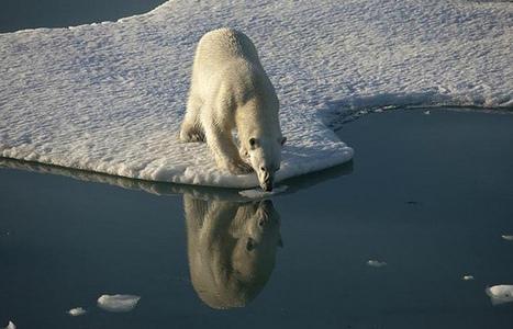 El deshielo del Ártico amenaza al mundo con una catástrofe económica | Noticias de ecologia y medio ambiente | ECOSALUD | Scoop.it