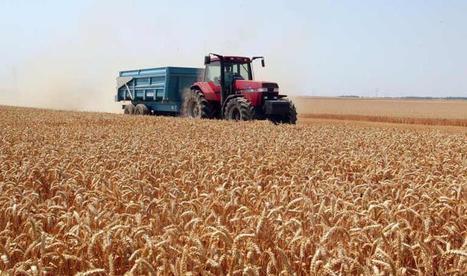 Vers une moisson historique de blé en France en2015 - Le Figaro | Le Fil @gricole | Scoop.it