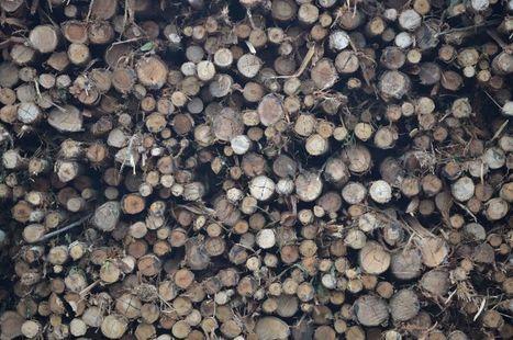WWF épingle les 25 entreprises françaises qui détériorent le plus les écosystèmes | Communication utile | Scoop.it