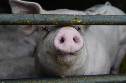 The stomach-churning reason why meat is so cheap | job shadow | Scoop.it