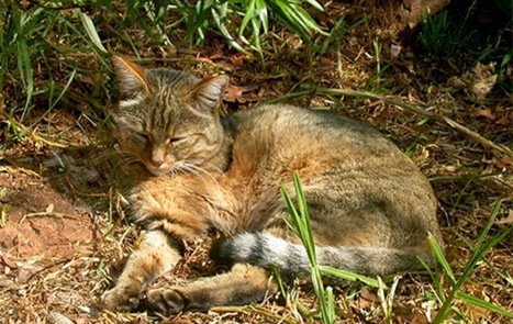 The Archaeology News Network: Cat domestication traced to Chinese farmers 5,300 years ago | Aux origines | Scoop.it