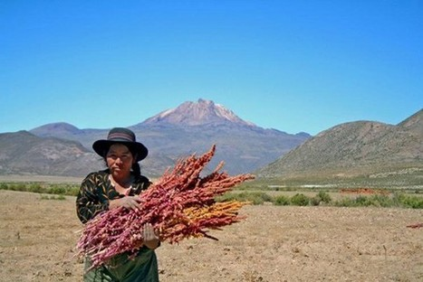 It's OK To Buy Quinoa—In Fact, It's Good for Poor People in the Andes | Agriculture, Environment and Trade | Scoop.it