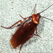 Palmetto bugs pest control nearby West Palm Beach, Florida | Pest control West Palm Beach Florida | Scoop.it