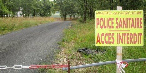 Grippe aviaire en Dordogne : les élevages voisins du nouveau foyer sous surveillance renforcée | Agriculture en Dordogne | Scoop.it