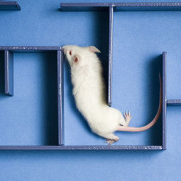 If You Give a Mouse a Human Speech Gene, It Learns Faster - Popular Mechanics | The Introverts Social Network | Scoop.it
