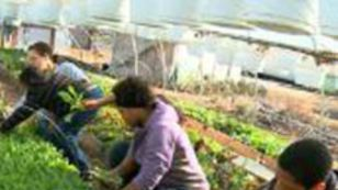 The Appeal of Urban Farming | Vertical Farm - Food Factory | Scoop.it