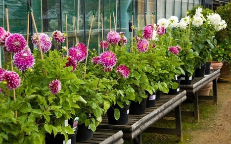 JIC mention: Scientists find proof plants are capable of complex arithmetic | BIOSCIENCE NEWS | Scoop.it
