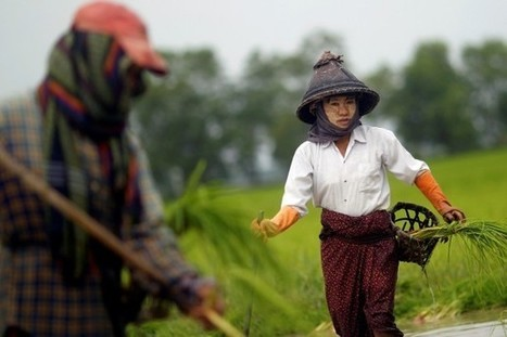 With Rice Cartel, Critics Say Burma Must Learn to Walk before It Runs - The Irrawaddy News Magazine | Oligopolies | Scoop.it