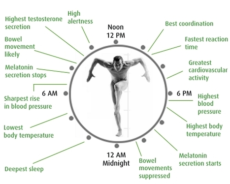 Scientists redraw the blueprint of the body's biological clock | omnia mea mecum fero | Scoop.it