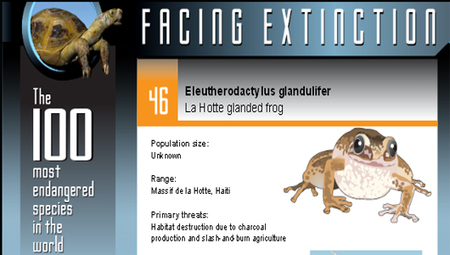 The 100 most endangered species in the world [Infographic] | Dear World, wake up! | Scoop.it