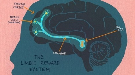 What's Going on Inside the Brain Of A Curious Child? | Graphic Coaching | Scoop.it