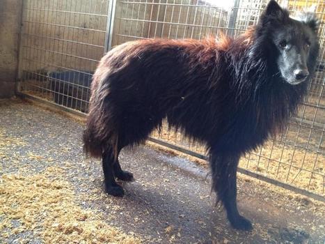 Le sauvetage de 41 chiens et chats dans un élevage insalubre de la Somme | CaniCatNews-actualité | Scoop.it