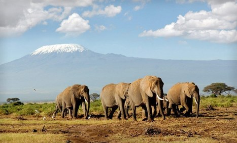 Kenya Safari Holiday Discount Voucher (40% Discount) | TOURISM CONTENT CURATOR | Scoop.it