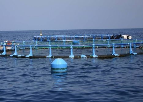Spain working on Strategic Plan for aquaculture | Aquaculture | Scoop.it