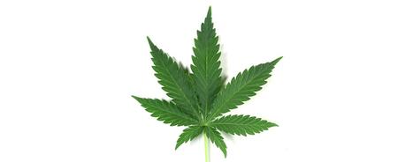 17 Marijuana Snacks To Eat During The Stoner Bowl - BuzzFeed | The legalization of marijuana | Scoop.it