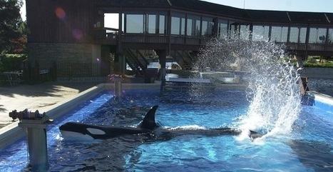 Save Orcas From Performing at California Marine Parks | GarryRogers Biosphere News | Scoop.it