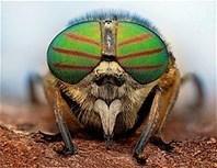 Les yeux fascinants des insectes   Inter Nettoyage Service Bretagne   Scoop.it