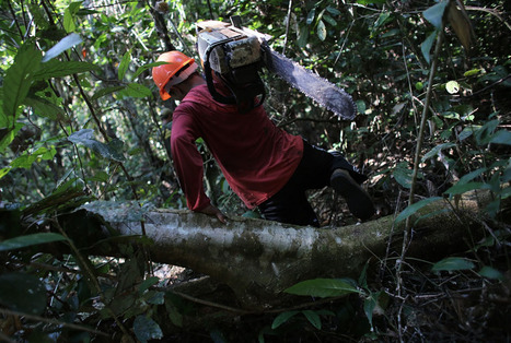 The Amazon: From Paradise to inferno   Rainforest EXPLORER:  News & Notes   Scoop.it