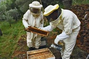 KUNA : Beekeeping.. A lucrative business in Lebanon - Environment - 05/11/2016 | L'apiculture dans le monde | Scoop.it