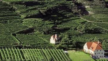Austrian wine exports double in value | Vitabella Wine Daily Gossip | Scoop.it