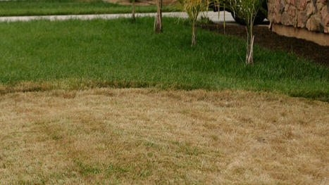 Gov. Jerry Brown signs bill barring fines for dead lawns during drought | Sustainability Science | Scoop.it