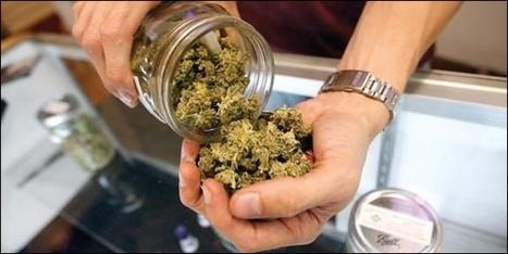 L'essentiel Online - «Le cannabis n'est pas seulement une drogue» - Luxembourg | Nastassia Solovjovas. Mes productions | Scoop.it