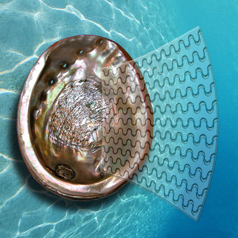 Mollusc Shells Inspire Super-glass | Biomimicry | Scoop.it