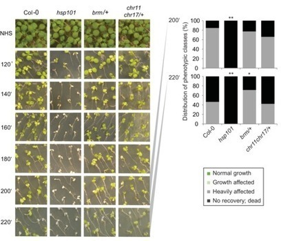 Arabidopsis FORGETTER1 mediates stress-induced chromatin memory through nucleosome remodeling | SEED DEV LAB Biblio | Scoop.it