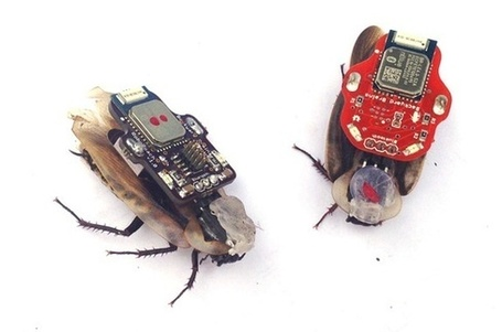 Cyborg Cockroaches May Become New Teaching Tools in Neuroscience Classes - Smithsonian (blog) | Artificial Intelligence | Scoop.it
