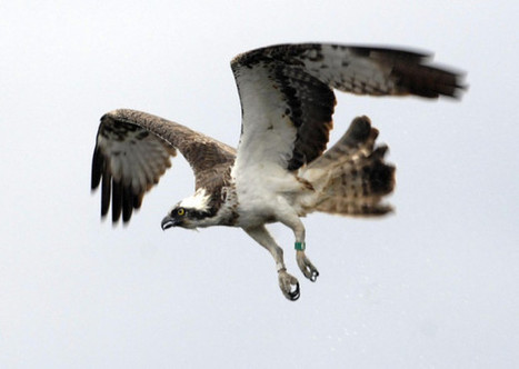 Rise in number of birds of prey crimes   Wildlife Trafficking: Who Does it? Allows it?   Scoop.it