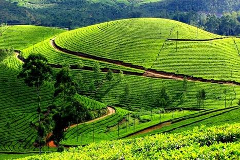 6Nights / 7Days Kerala Package   mangalamtourism.com   India Tours   Scoop.it