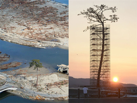 Japan Turned the One Surviving Tsunami Tree Into a Gigantic Sculpture | Tsunami's | Scoop.it