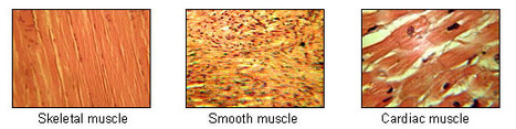 Microbot muscles: Chains of particles assemble and flex | (e) Science News | Amazing Science | Scoop.it