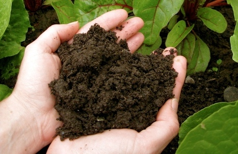 How to prepare your own garden compost! | The Lovely Plants | Gardening is more than Digging the Dirt | Scoop.it