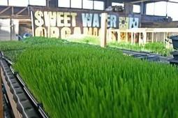 Aquaponics: An Interview with Sweet Water Organics' Matt Ray | Urban Aquaponics Farm | Scoop.it