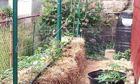 Straw Bale Garden Journal: The Veggies Are In   Organic Gardening   Scoop.it