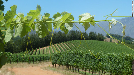 A journey through South Africa's stunning wine region | Vitabella Wine Daily Gossip | Scoop.it