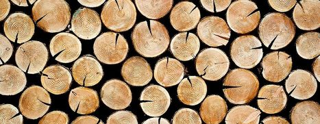 The business of trees | Timberland Investment | Scoop.it