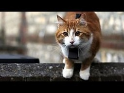 Cat Watch 2014 Episode 3 - Revealing The Language of Cats | Catnip Daily | Scoop.it