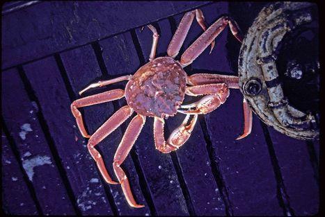 Worsening ocean acidification threatens Alaska fisheries | Ocean Acidification | Scoop.it