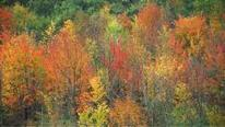 Speaking of Nature: Why is winter coming? - The Recorder | Planet Earth | Scoop.it