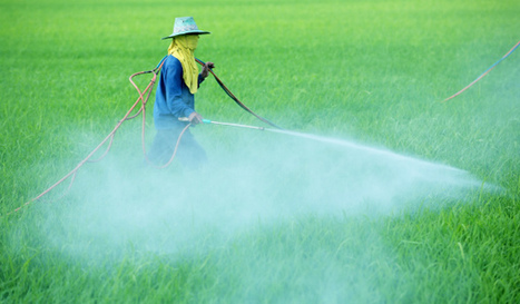 Domestic Players Pesticides Strategy|India Insecticides |Herbicides Market | Healthcare Market Research Reports | Scoop.it
