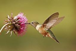 Six Google Hummingbird Optimisation Ideas | all | Scoop.it