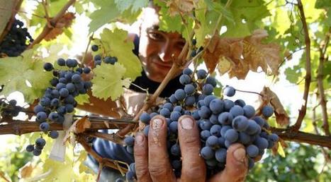 Les Britanniques se mettent à produire du vin massivement mais ... - Atlantico.fr | Christophe Durand Conseils | Scoop.it
