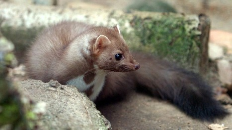 A weasel-like animal took down the world's largest particle accelerator | Marketing your technologies around the world | Scoop.it