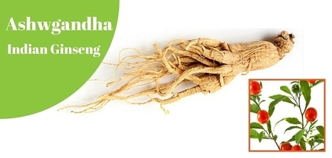 10 Powerful Health Benefits of Ashwagandha You Must Know | GoMama 24/7 | Cyrus | Scoop.it